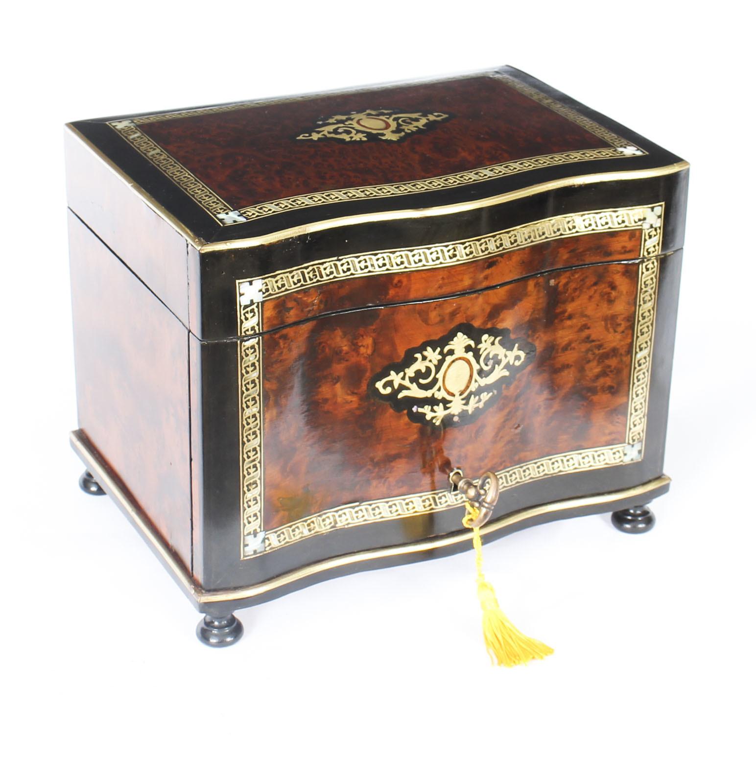 Antique Burr Walnut Boule Serpentine Cigar Humidor C 1870
